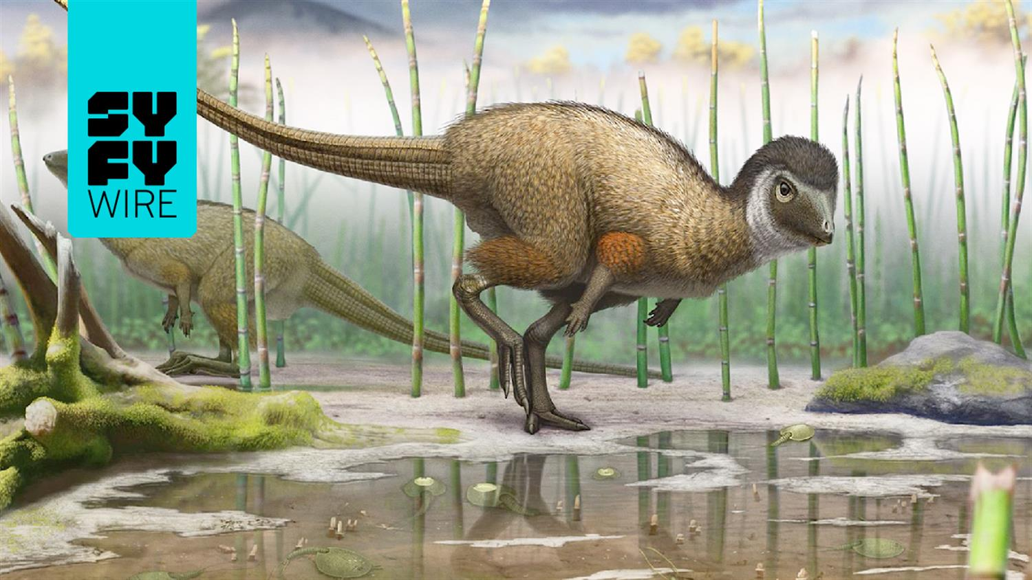 What Dinosaur Fossil Digging Is Really Like (Science Behind the Fiction)